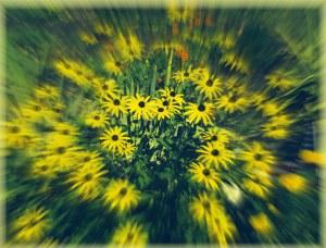 Swoosh-Flowers