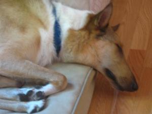 Taking-a-nap
