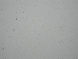 snow-being-snow