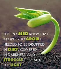 Seed-struggle-light