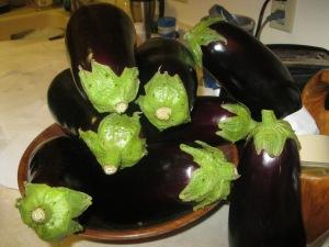 Herd of eggplant.