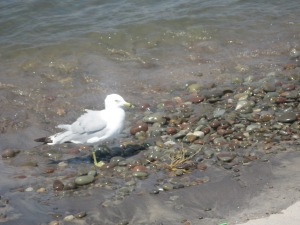 Mandatory Seagull picture 2.