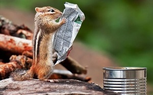 chipmunk-reading