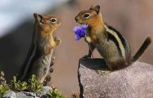 chipmunks-dating